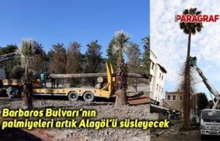 Barbaros Bulvarı'nın palmiyeleri artık Alagöl'ü...