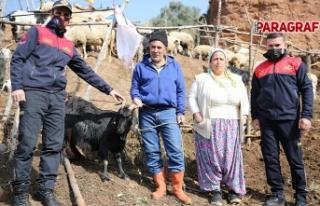 İtfaiye Dağda 5 gün Mahsur Kalan Keçiyi Kurtardı