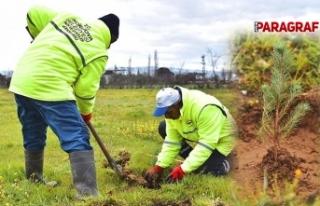İncirliova Belediyesi 400 fidanı toprakla buluşturdu