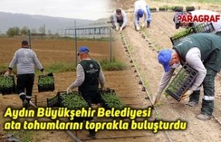 Aydın Büyükşehir Belediyesi ata tohumlarını...