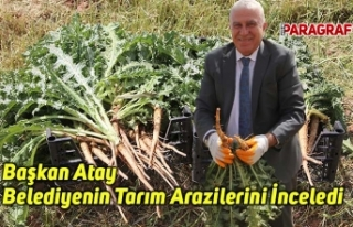 Başkan Atay Belediyenin Tarım Arazilerini İnceledi