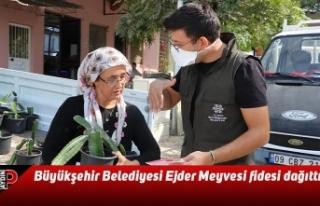 Aydın Büyükşehir Belediyesi Ejder Meyvesi fidesi...