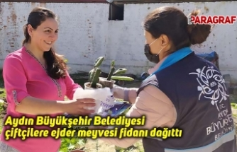 Aydın Büyükşehir Belediyesi çiftçilere ejder meyvesi fidanı dağıttı