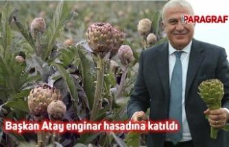Başkan Atay enginar hasadına katıldı