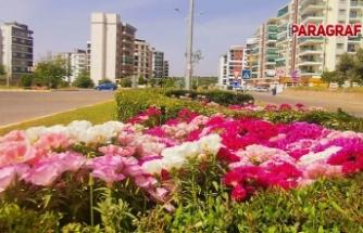 Aydın Büyükşehir Belediyesi çalışıyor, Nazilli güzelleşiyor