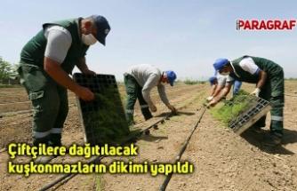 Çiftçilere dağıtılacak kuşkonmazların dikimi yapıldı