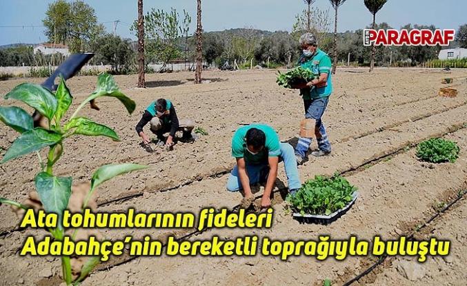 Ata tohumlarının fideleri Adabahçe'nin bereketli toprağıyla buluştu