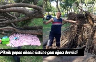 Piknik yapan ailenin üstüne çam ağacı devrildi