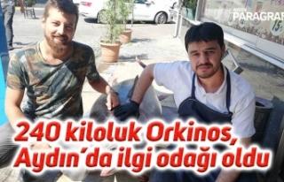 240 kiloluk Orkinos, Aydın'da ilgi odağı oldu